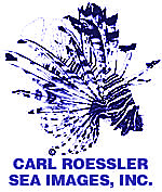 Lionfish by Carl Roessler